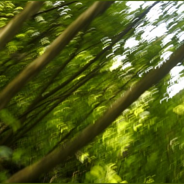 ....tak,tylko wtedy człowiek prawdziwie wypoczywa. Z dala od zgiełku ulic, wsród szumu drzew,spiewu ptaków.Wystarczy  usiąsć w lesie,na polance,  ,wyłaczyc telefon komórkowy i wsłuchać się w odgłosy natury.Wszystkie pory roku są piękne,ale my ..w ciągłym biegu (za czym???), czasami nie zauważamy,że dawno minęła wiosna,że mamy połowę  lata....Przyszedł czas na zwolnienie tempa ,zanurzenia się  w zieleni,czas nabrania sił...do  ...do wszystkiego. Swój 2 miesięczny urlop spędziłam w wielu miejscach (Polska),ale większosć dni , nie w  wielkich  miasta,lecz w małych miejscowosciach  ,wsród  łąk i lasów  bieszczadzkich, parkach lesnych, ........Już tęsknię..Fot. z Pobytu w Polsce i obecne, z Webster.