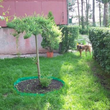 Mój ogródek Maj 2009 r.