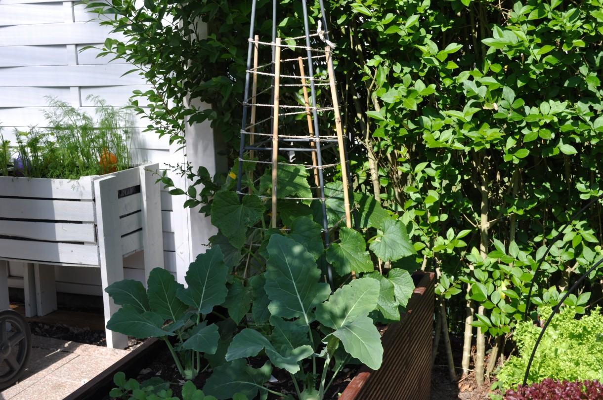 Ogród, Ogrod
