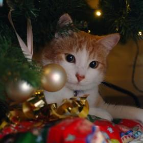 Boze Narodzenie 2013