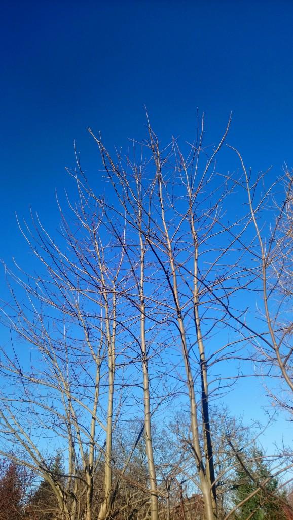 Dekoratorzy, Czekając na wiosnę .................. - .................i uśpione drzewa..................