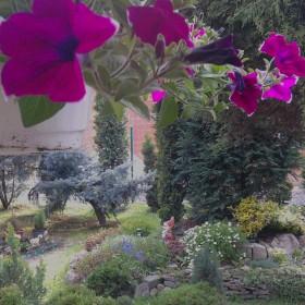 mała ogrodniczka