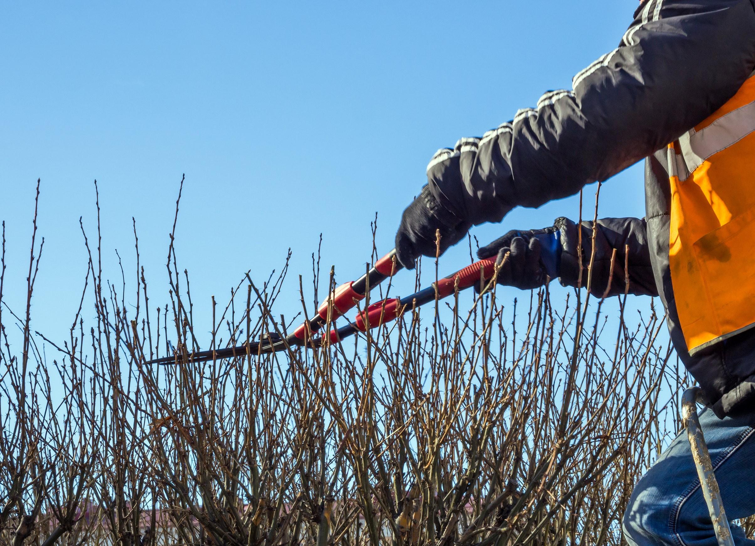Przycinanie drzewek owocowych