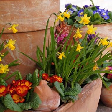 Wiosna w donicach