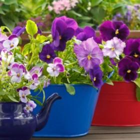 Jakie kwiaty wybrać na balkon? 10 doskonałych propozycji