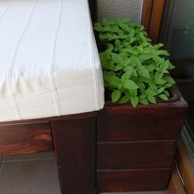 ... hiacynty wykopane, plantacja bazylii rośnie...