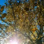 Ogród, Już listopad ............. - ...............i orzech.................