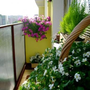 Balkon - mój prywatny kawałek raju 2010 :)