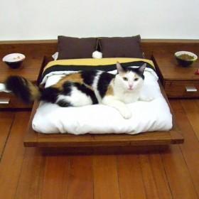 Gadżety dla kotów