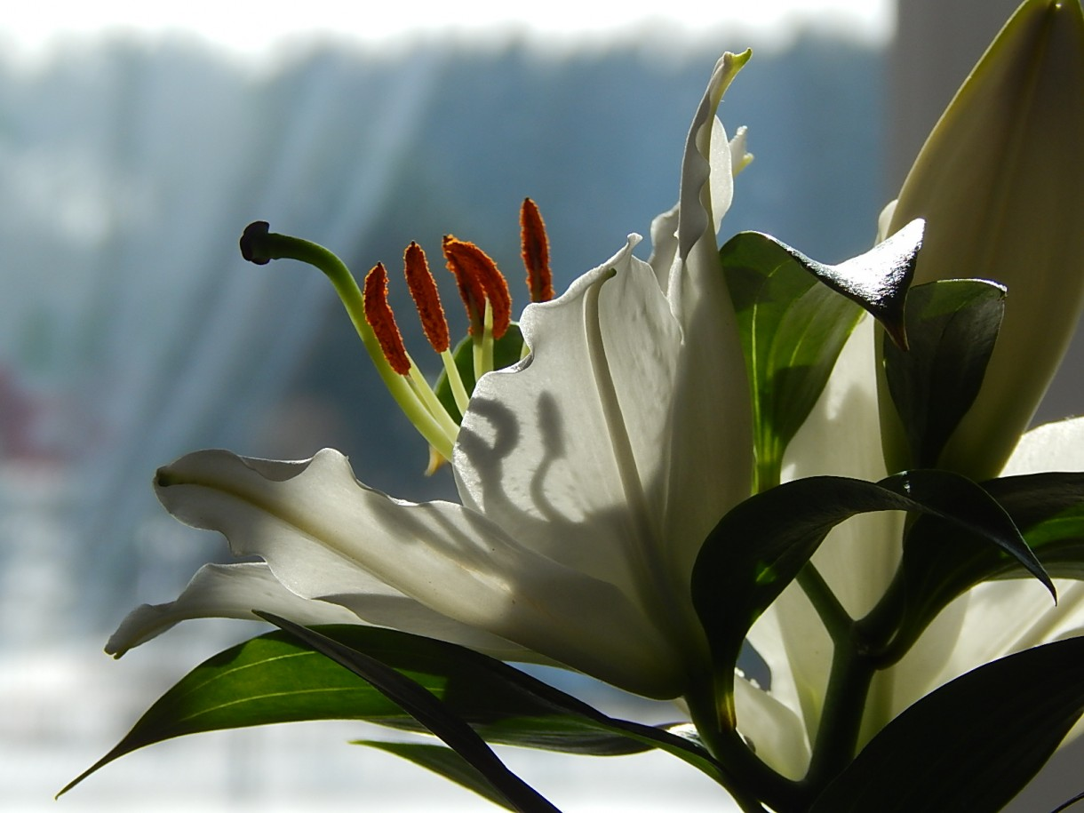 Rośliny, POEZJA I PROZA ŻYCIA... - :)