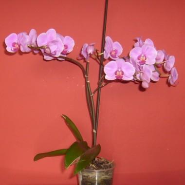 ....i dziś...dużo więcej kwiatów...dużo więcej radości:)