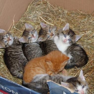 Mieszkanko dla kotków:-)