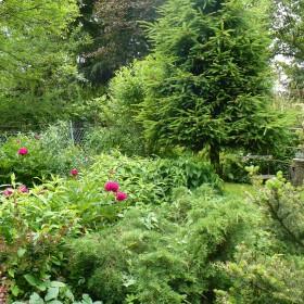W moim ogrodzie gdzie czas leniwy...
