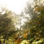 Rośliny, Listopadowe fotki.........i listopadowe bombki.......... - ............i park...............