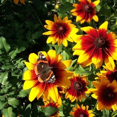 Mój ogród, moje kwiaty i krzewy