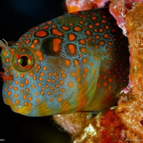 Cuda podmorskich głębin