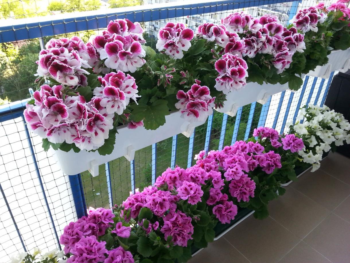 Kolorowy Balkon Deccoriapl