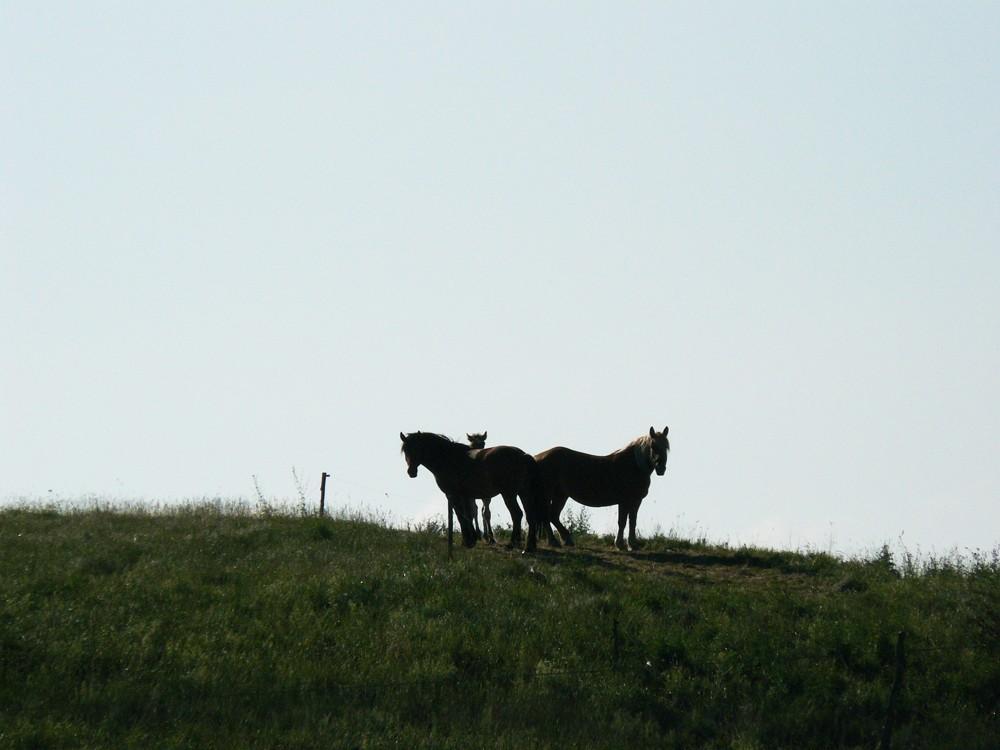 Realizacje, Widoki z Wonnego Wzgórza - takie kuniki nas żegnają, jak co rano zjeżdżamy w dół, pasą się na wzgórzu obok