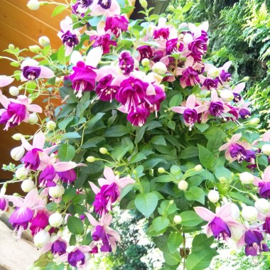 W mini ogródku.