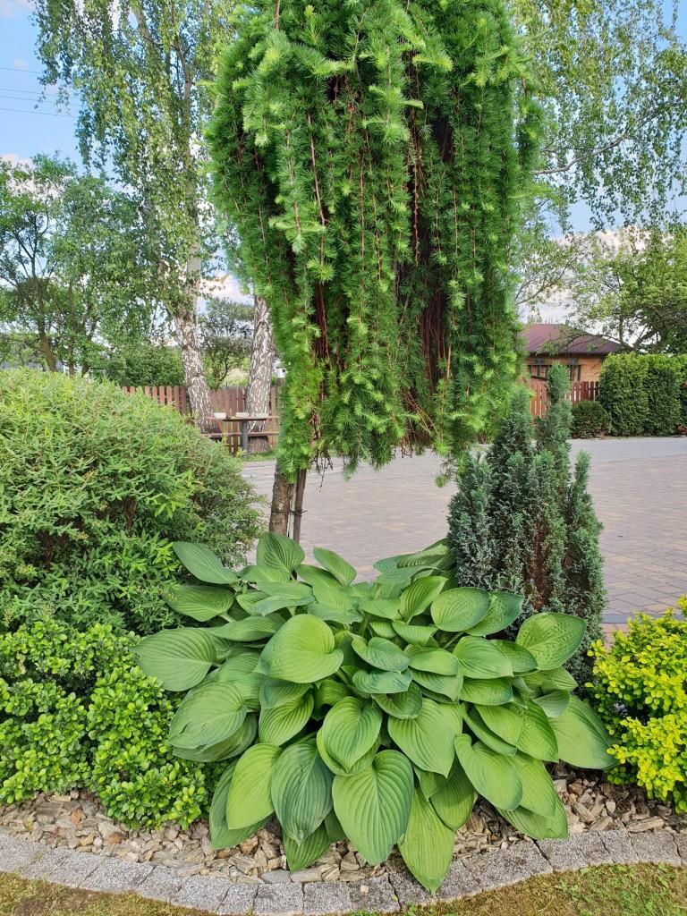 Ogród, Ogród