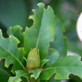Na jakie choroby najczęściej zapadają rododendrony?