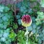 Ogród, Letnia:))) - :)
