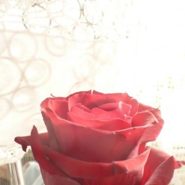 .................i róża...............