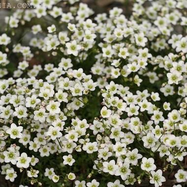 wiosna w ogrodzie - zieleni się i rozkwita