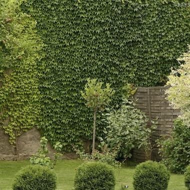 w moim ogrodzie lato 2014