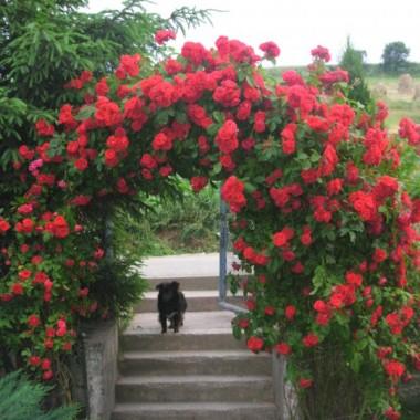 Kwiaty balkonowe:)
