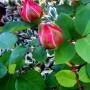 Rośliny, Nastrojowe miejsca w Forest Hills