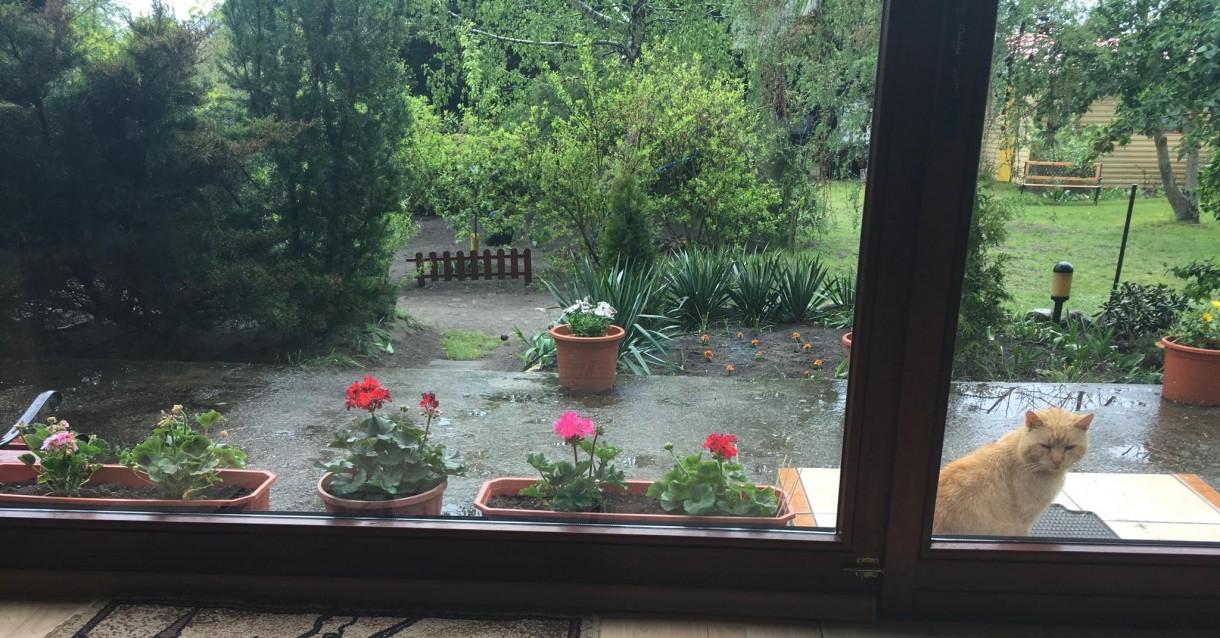"""Rośliny, ''Wiosna na parapecie"""" - Taras i piękne kwiaty w donicach"""