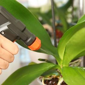 Jak dbać o rośliny domowe zimą