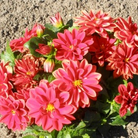 barwy lata w moim ogrodzie