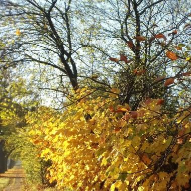 .............i złote drzewa...........