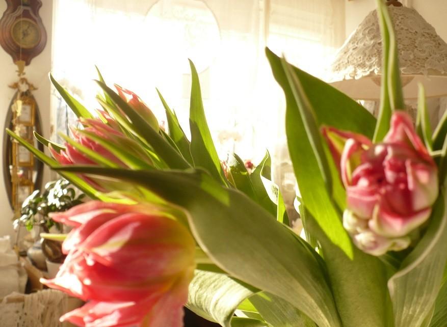 Pozostałe, Lutowa...............zimowa..............z damami.....i panami.. - ...........i tulipany............