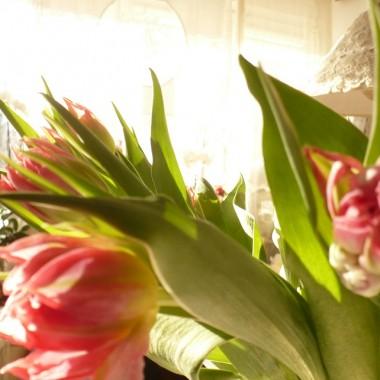 ...........i tulipany............