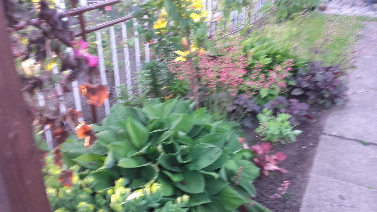 Rośliny, ogrodeczek