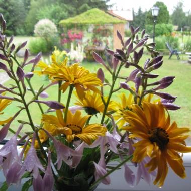 Nie padało długo a jak zaczęło to nie ma końca, na dodatek silne wiatry nie sprzyjają kwiatom.....