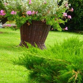kilka ujęć z ogródka