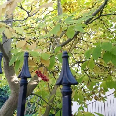 ...............i nasiona na magnolii..............