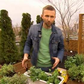 Jak założyć domowy ogródek z zielnikiem na tarasie lub balkonie