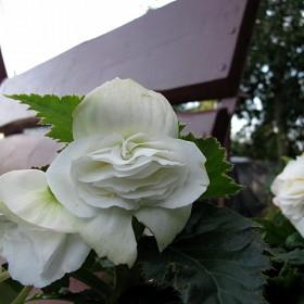 letni ogródek