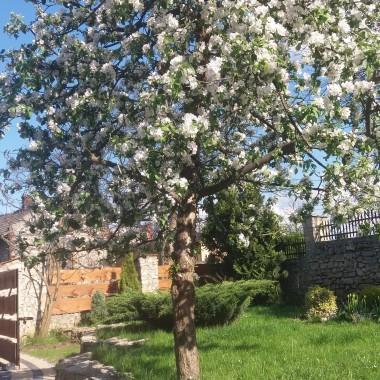 Każdy dzień nas zbliża do wiosny