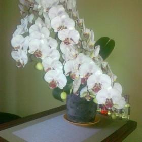 storczykowo ,ogórkowo , kwiatowo hihihi:)