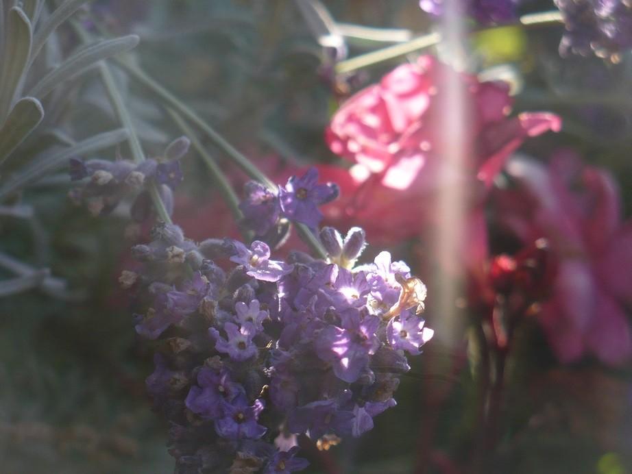 Pozostałe, Galeria jesienna.................październikowa............. - ...............i moje kwiaty na balkonie....................
