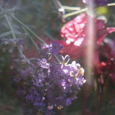 ...............i moje kwiaty na balkonie....................