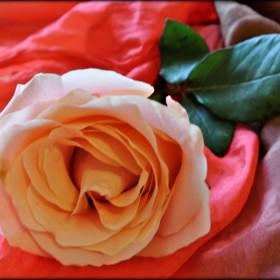 "Galeria ""Pod Różą"""