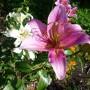 Pozostałe, kwiatowo-motylkowo