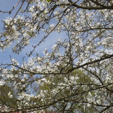 .............i białe kwiaty...............